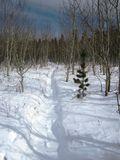 Snow1x